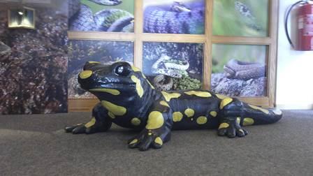 Amphibienausstellung