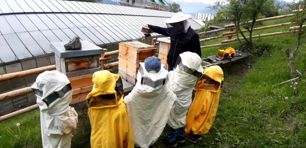 Den Bienen ganz nah!